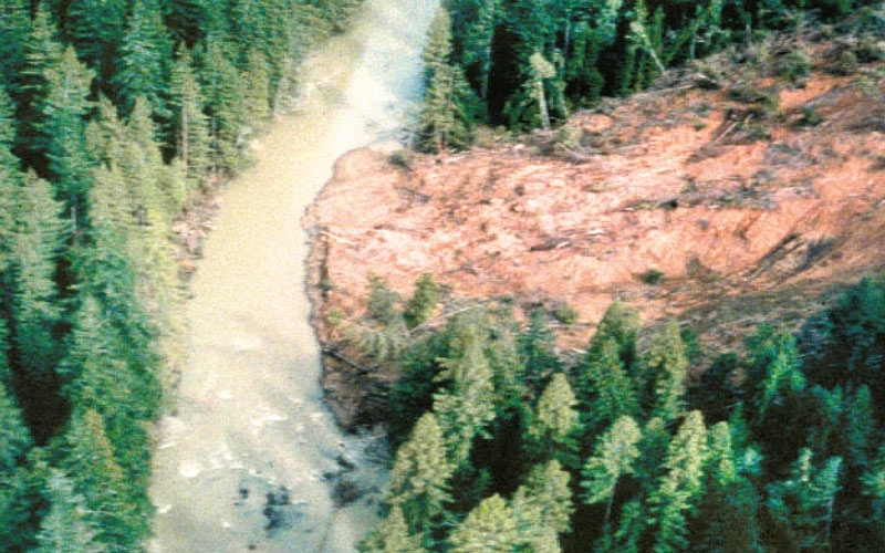 large mud slide surrounded by trees